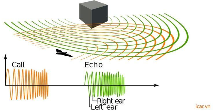 Cách định vị vật thể của loài dơi bằng sóng Siêu Âm