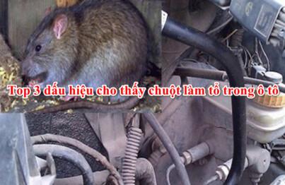 Chuột vào ô tô