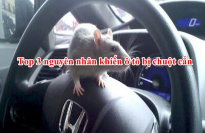 Nguyên nhân khiến ô tô bị chuột cắn