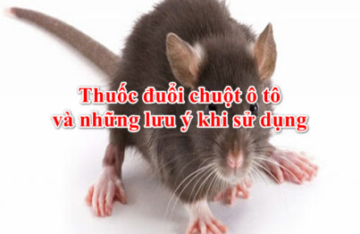 Thuốc đuổi chuột ô tô