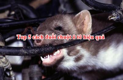 top 5 cách đuổi chuột ô tô